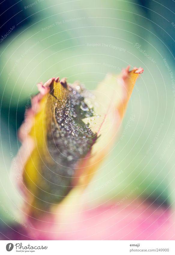 Schmetterling Natur Pflanze Blatt klein glänzend Wassertropfen natürlich Tropfen Mikrofotografie