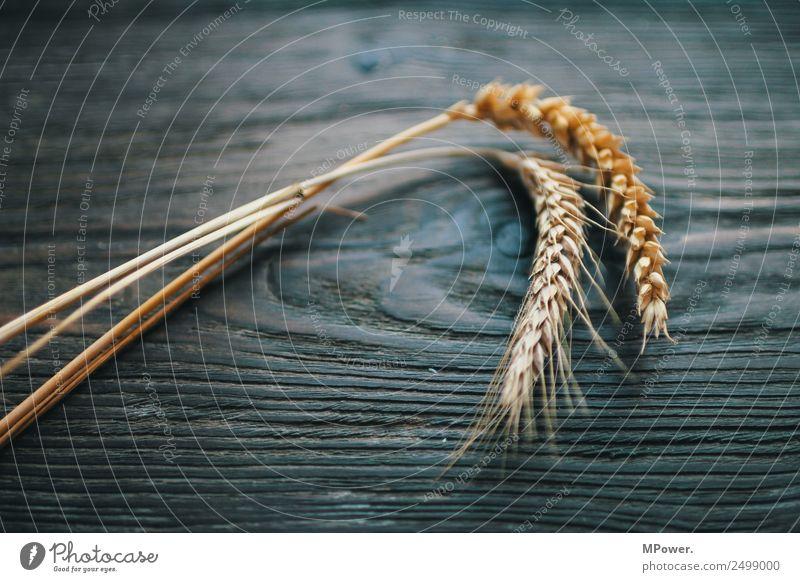 getreidesorten Pflanze orange Rohstoffe & Kraftstoffe Getreide Roggen Weizen Ähren Landwirt Landwirtschaft Ernte Grundstoff Lebensmittel gluten Halm Farbfoto