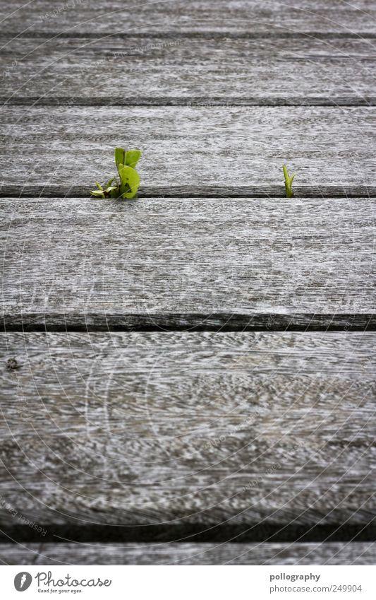 still alive Natur Erde Frühling Sommer Pflanze Gras Blatt Grünpflanze Wildpflanze Terrasse Holz Blühend entdecken Wachstum frisch nah nachhaltig natürlich neu