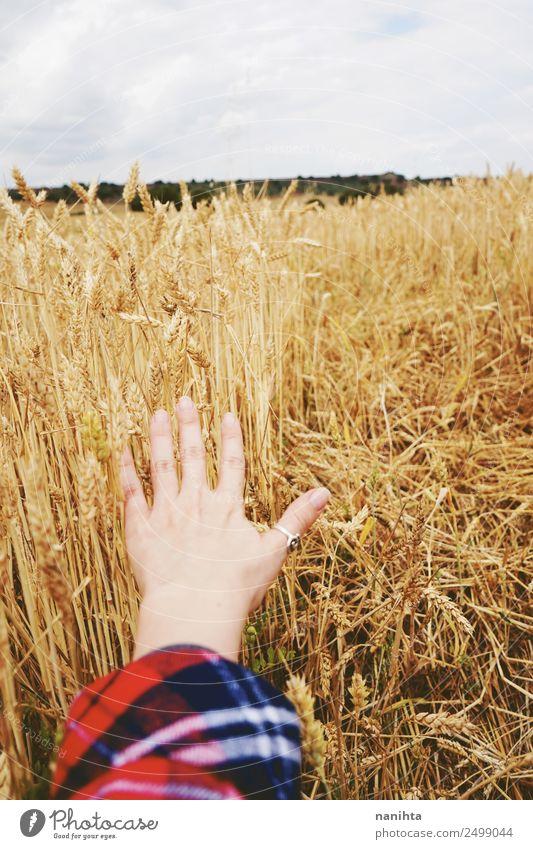 Mensch Natur Sommer Pflanze Hand Leben gelb Herbst Umwelt natürlich Arbeit & Erwerbstätigkeit Horizont Feld frisch authentisch berühren
