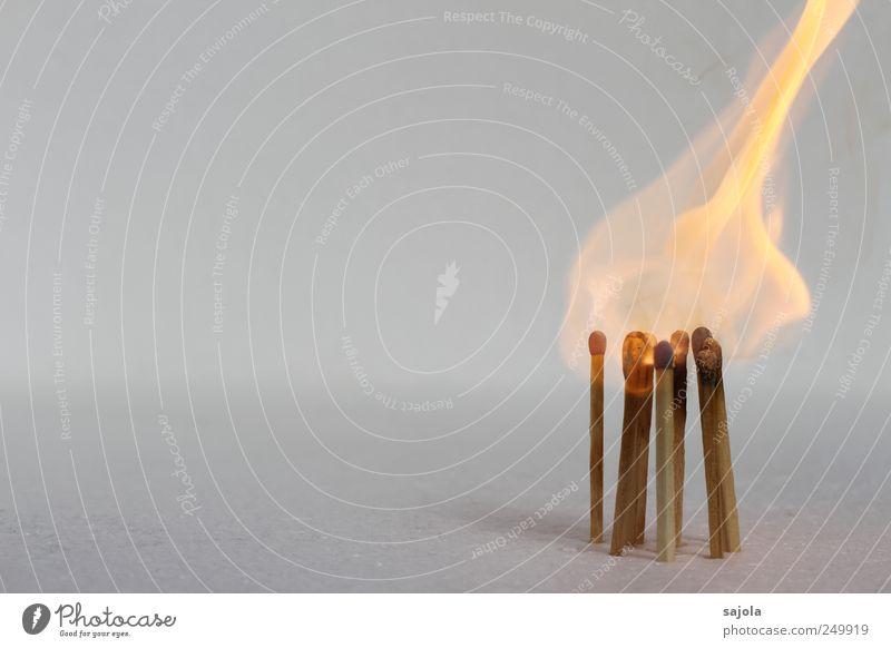 flammenhut Feuer Holz heiß brennen Streichholz brennbar Flamme Farbfoto Menschenleer Textfreiraum links Textfreiraum oben Freisteller Hintergrund neutral