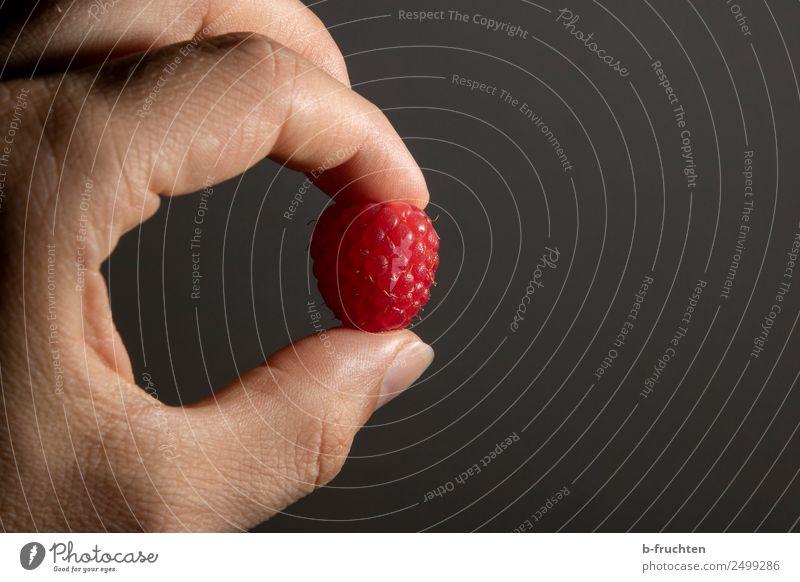Himbeere Frucht Mann Erwachsene Hand Finger festhalten frisch Himbeeren einzeln 1 Beeren Süßwaren lecker vitaminreich Farbfoto Innenaufnahme Studioaufnahme