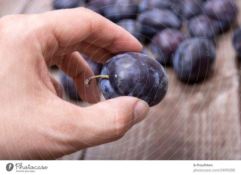 Zwetschgen Lebensmittel Frucht Bioprodukte Gesunde Ernährung Mann Erwachsene Hand Finger Holz festhalten frisch Gesundheit genießen Pflaume reif lecker Ernte
