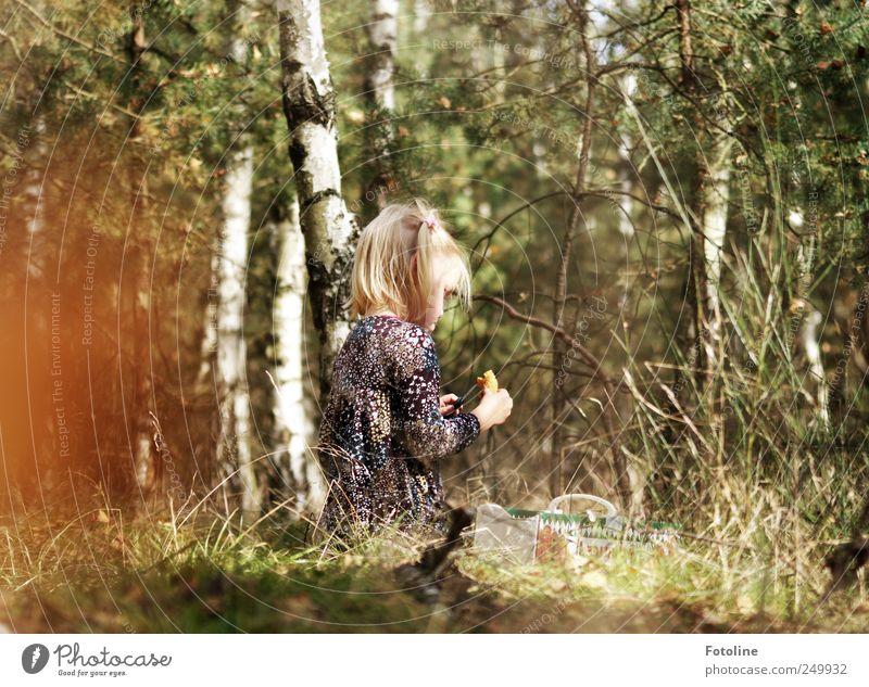Mama! Gibts den bösen Wolf? Mensch Kind Mädchen Kindheit Umwelt Natur Pflanze Herbst Baum Gras Wildpflanze Wald hell natürlich Reinigen Birke Birkenwald