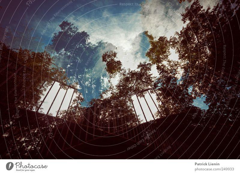 urban jungle Natur Stadt Baum Pflanze Sommer Umwelt Brücke außergewöhnlich Verbindung Urwald Übergang abstrakt schwindelig