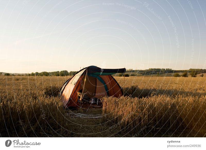 Ein Zelt im Kornfeld, das ist immer frei Natur Sommer Ferien & Urlaub & Reisen ruhig Einsamkeit Ferne Erholung Leben Freiheit Umwelt Landschaft Wege & Pfade träumen Feld Freizeit & Hobby Abenteuer