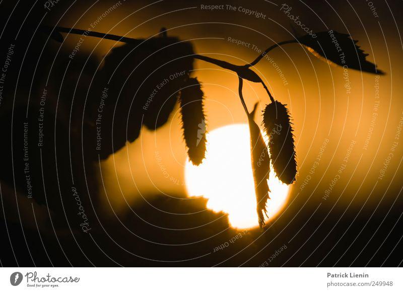 Hyper Chondriac Music Abenteuer Freiheit Sommer Sonne Umwelt Natur Urelemente Luft Himmel Sonnenaufgang Sonnenuntergang Sonnenlicht Wetter Schönes Wetter