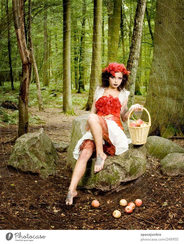 Rotkäppchen Mensch Natur Jugendliche grün schön Baum Pflanze rot Wald feminin Umwelt Landschaft Erwachsene Stein sitzen Felsen
