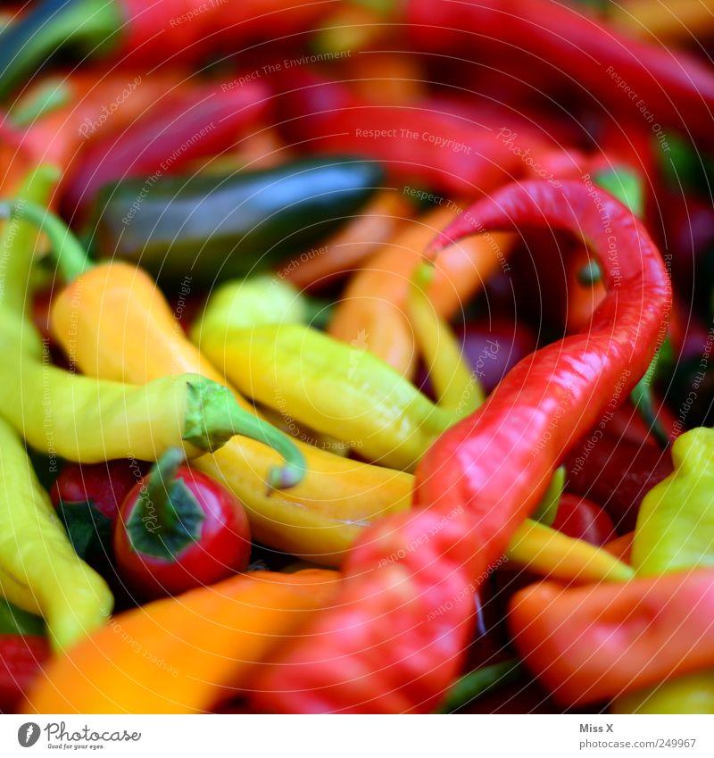 Scharf und bunt im Q rot gelb Ernährung Lebensmittel frisch heiß Kräuter & Gewürze Gemüse Scharfer Geschmack lecker Ernte Bioprodukte Chili Paprika