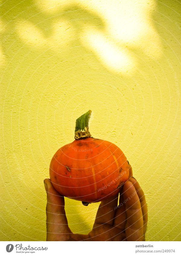 Kleiner Kürbis again Natur Hand Pflanze Erholung Herbst Garten Frucht Lebensmittel Wachstum Ernährung Ernte Bioprodukte Halloween Schrebergarten Kürbis Vegetarische Ernährung