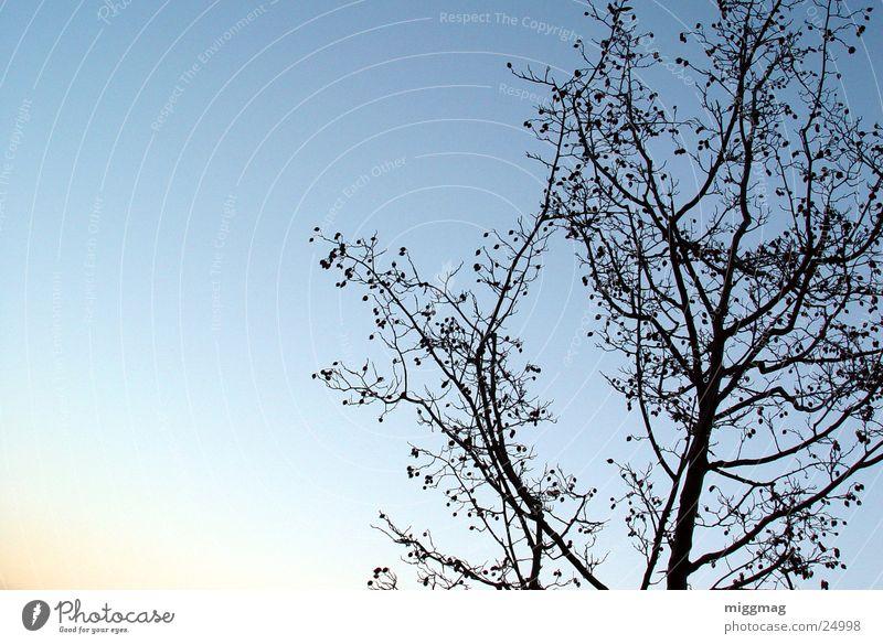 Kahles gen Himmel Baum Sonne blau Winter Blatt Herbst Ast November Dezember Oktober