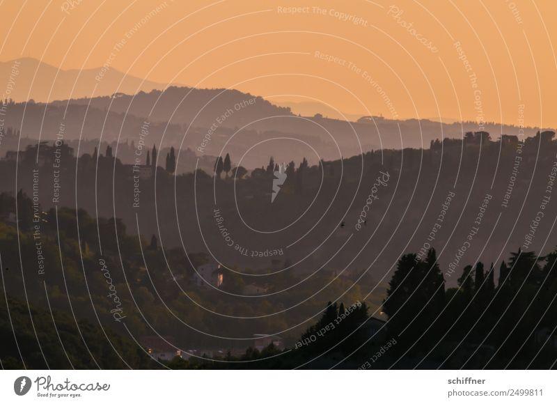 Verwandlung | von Tag zu Nacht Landschaft Wolkenloser Himmel Horizont Sonnenaufgang Sonnenuntergang Sonnenlicht Sommer Schönes Wetter Wärme Baum Garten Wald