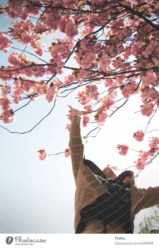 Wenns schon nicht die Sterne sind... Mensch Natur Mann blau weiß Pflanze Baum Freude Frühling Blüte Glück springen rosa maskulin Arme Schönes Wetter