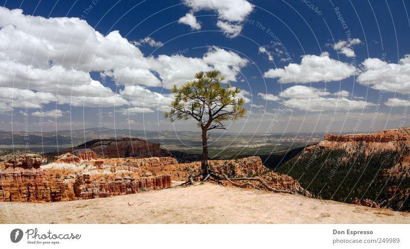 Ponderosa Pine Himmel Natur Baum Ferien & Urlaub & Reisen Sommer Wolken Ferne Landschaft Freiheit Berge u. Gebirge Hintergrundbild Felsen Ausflug wandern frei