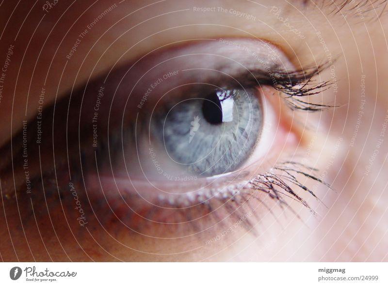 Augen auf Glück schön Schminke Wimperntusche Mensch feminin Junge Frau Jugendliche Erwachsene glänzend Blick leuchten blau Gefühle eye focus Zauberei u. Magie