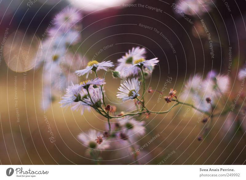 home. Sommer Blume Frühling Zufriedenheit natürlich Freundlichkeit Lebensfreude Schönes Wetter Gänseblümchen Frühlingsgefühle