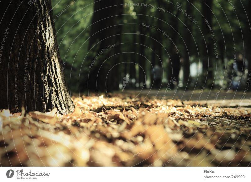 Oh nein! Es wird Herbst! Natur Pflanze Blatt schwarz Umwelt Wege & Pfade Park braun Erde gold leuchten Fußweg Baumstamm Verkehrswege Schönes Wetter
