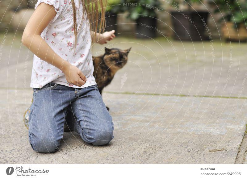 mädchenfoto .. mit katze Kind Mädchen Kindheit Jugendliche Haare & Frisuren Arme Hand 1 Mensch 3-8 Jahre Beton berühren Tierliebe Katze Haustier Hof Jeanshose