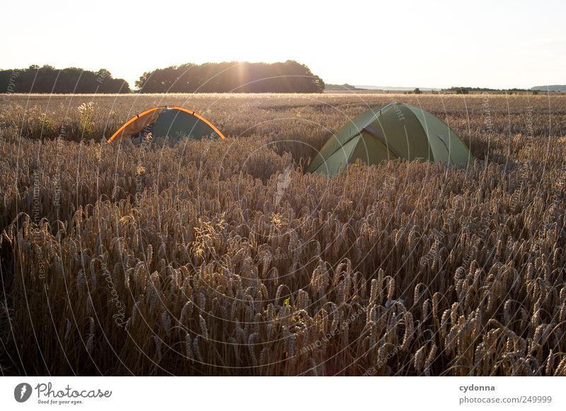 Draußen zuhause Natur Sommer Ferien & Urlaub & Reisen ruhig Einsamkeit Ferne Erholung Leben Freiheit Umwelt Landschaft träumen 2 Feld Freizeit & Hobby Ausflug