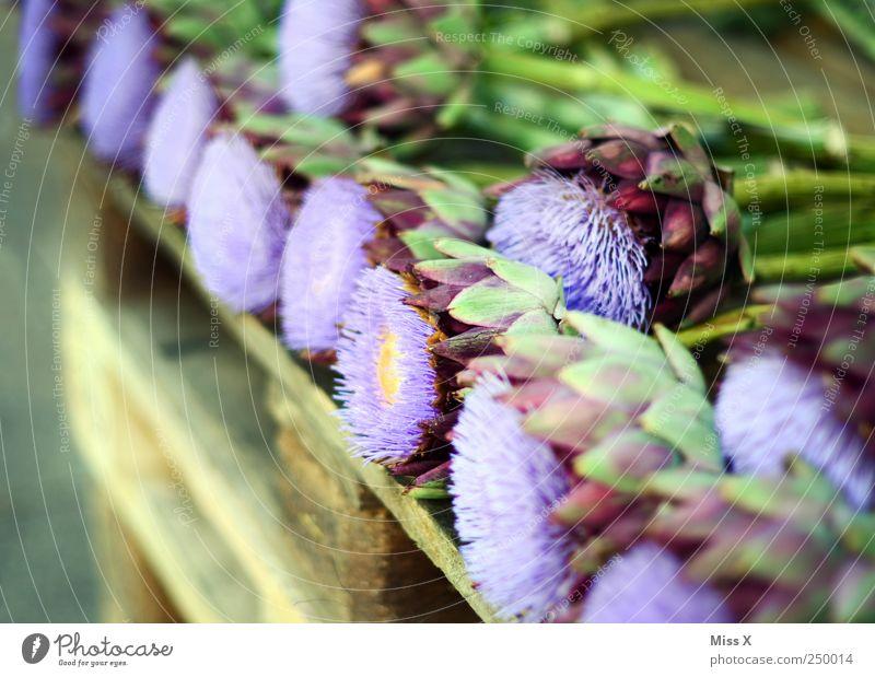 Distel Pflanze Blume Blatt Blüte violett Gemüse stachelig Paletten Blumenhändler Blumenladen Artischocke Distelblüte