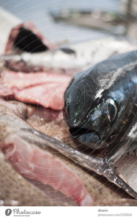fish-head Tier Ernährung Lebensmittel natürlich frisch Fisch lecker Fischereiwirtschaft Fischauge Protein Fischmarkt Fischmaul Schwanzflosse