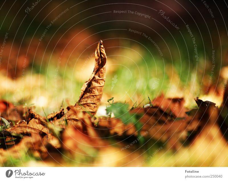 bunter Herbst Natur grün Pflanze Blatt Umwelt Park hell Beleuchtung natürlich Kastanienblatt