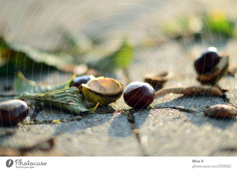 Herbstpflaster Natur Blatt Straße Wege & Pfade braun Kastanie Kastanienblatt herbstlich Farbfoto Außenaufnahme Nahaufnahme Menschenleer Textfreiraum oben
