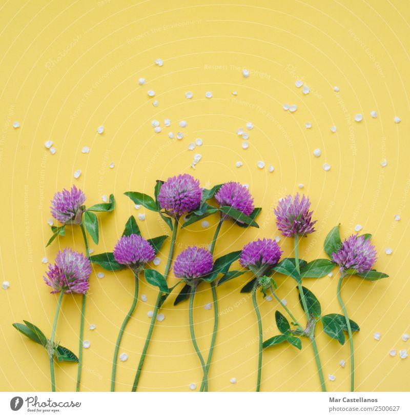 Sommer Pflanze schön Farbe grün weiß Blume Blatt gelb Frühling Blüte natürlich Gras Kunst Garten schreiben