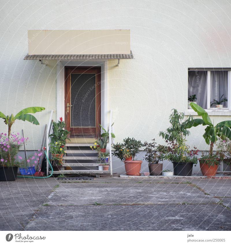 stadtgarten Pflanze Blume Grünpflanze Topfpflanze Haus Platz Bauwerk Gebäude Mauer Wand Treppe Fassade Fenster Tür Hof schön Farbfoto Außenaufnahme Menschenleer