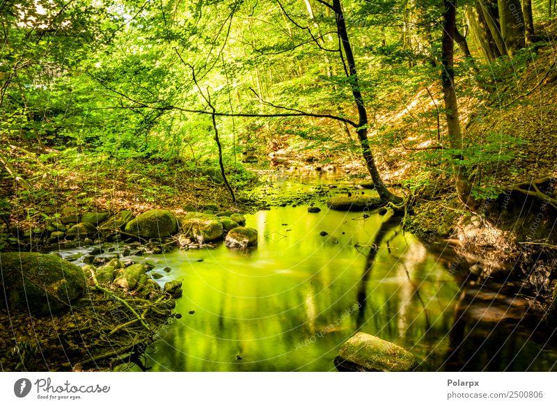 Grüner Wald im Sommer, der die Farben in einem Rivalen reflektiert. schön Ferien & Urlaub & Reisen Sonne Berge u. Gebirge Umwelt Natur Landschaft Pflanze Baum