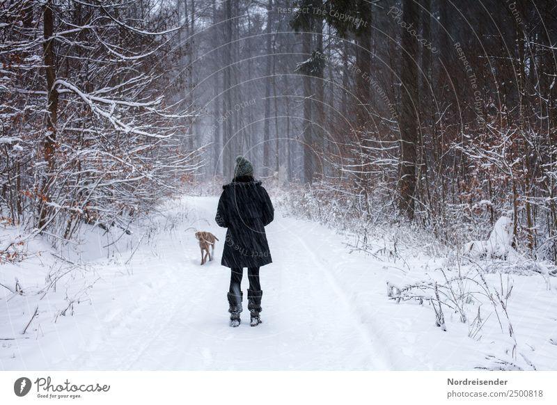Noch fünf Monate bis Weihnachten Frau Mensch Natur Hund Weihnachten & Advent Landschaft Erholung Tier Winter Wald Erwachsene kalt Wege & Pfade Schnee feminin