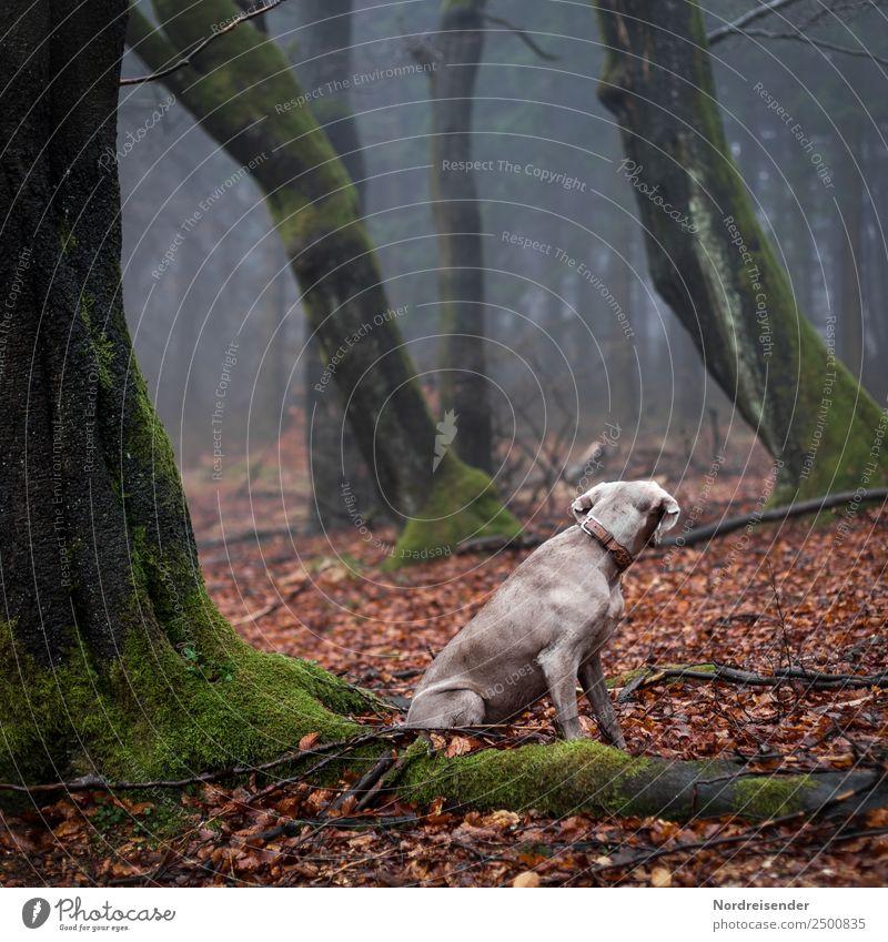 Krimi | Instinkt Natur Landschaft Urelemente Herbst Nebel Regen Baum Wald Urwald Tier Haustier Hund 1 beobachten warten Sicherheit Verschwiegenheit Tierliebe