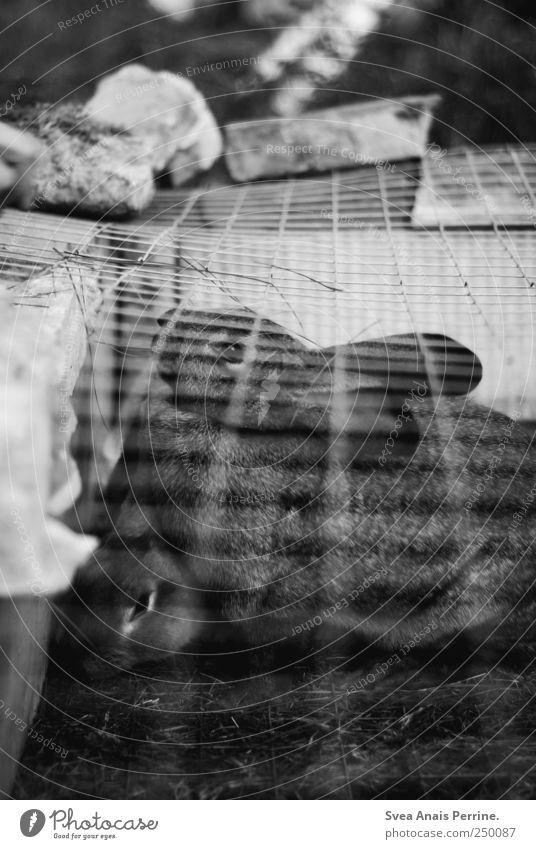 gefangenschaft. Einsamkeit Tier Wiese Stein Sehnsucht Schmerz dick Hase & Kaninchen Haustier Fernweh Gitter Fressen Käfig Hasenohren