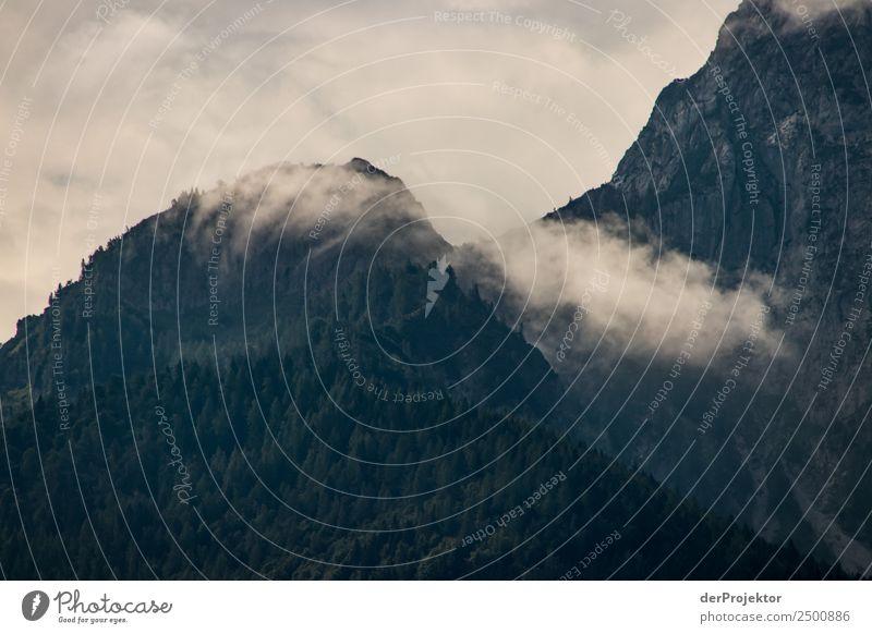 Nebel am Morgen Natur Ferien & Urlaub & Reisen Sommer Pflanze Landschaft Baum Tier Wolken Wald Ferne Berge u. Gebirge Umwelt Tourismus Freiheit außergewöhnlich