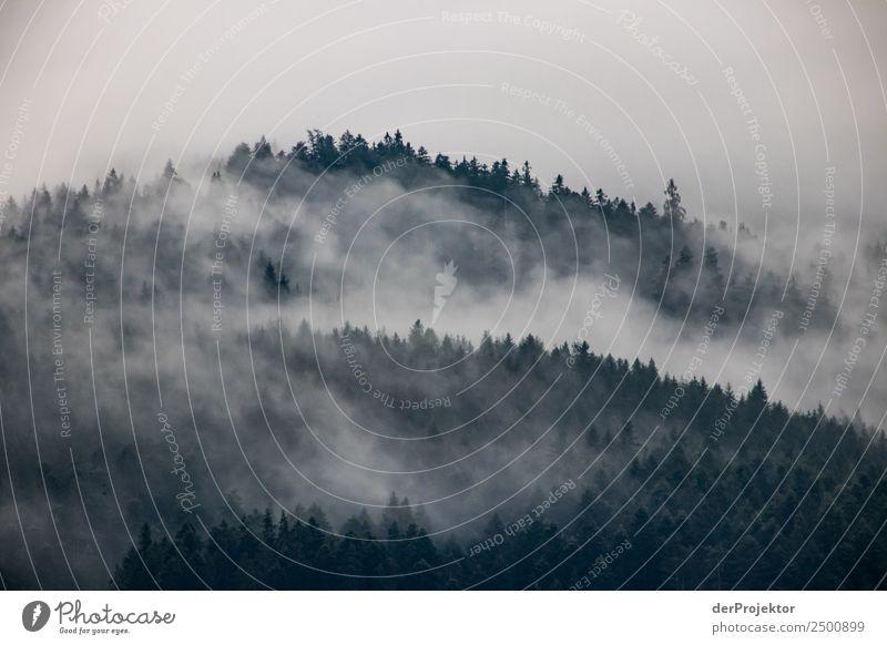 Nebelschwaden zieren einen Fichtenwald Natur Ferien & Urlaub & Reisen Sommer Pflanze Landschaft Baum Ferne Wald Berge u. Gebirge Umwelt Tourismus Freiheit