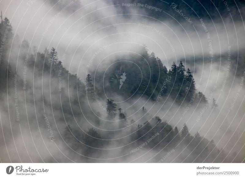 Nebelschwaden über einen Nadelwald Natur Ferien & Urlaub & Reisen Sommer Pflanze Landschaft Baum Ferne Wald Berge u. Gebirge Umwelt Traurigkeit Tourismus