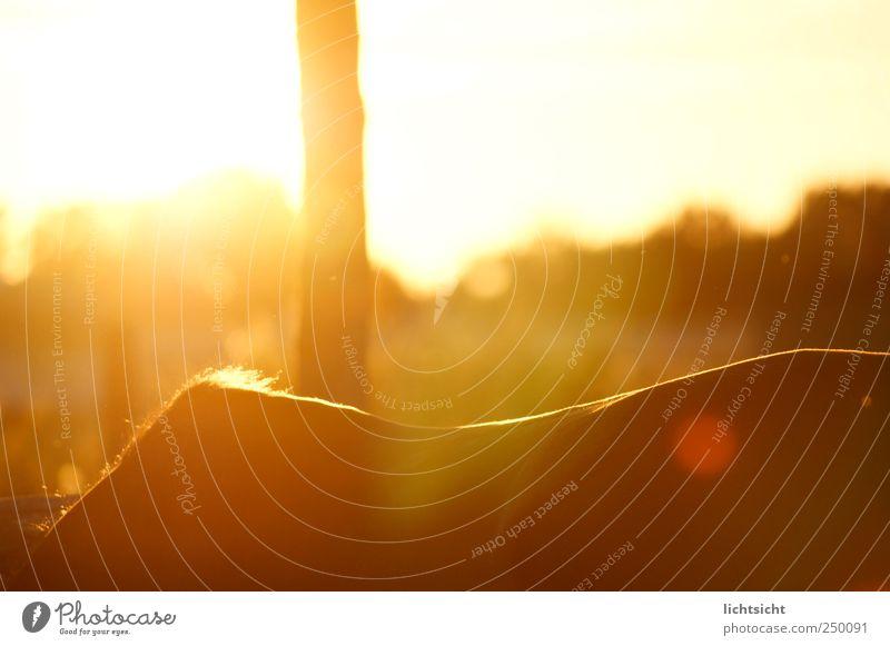 Das Glück der Erde... Natur Landschaft Sonnenaufgang Sonnenuntergang Wetter Schönes Wetter Baum Wiese Tier Haustier Pferd 1 Reiten Reitsport Weide Rücken Fell