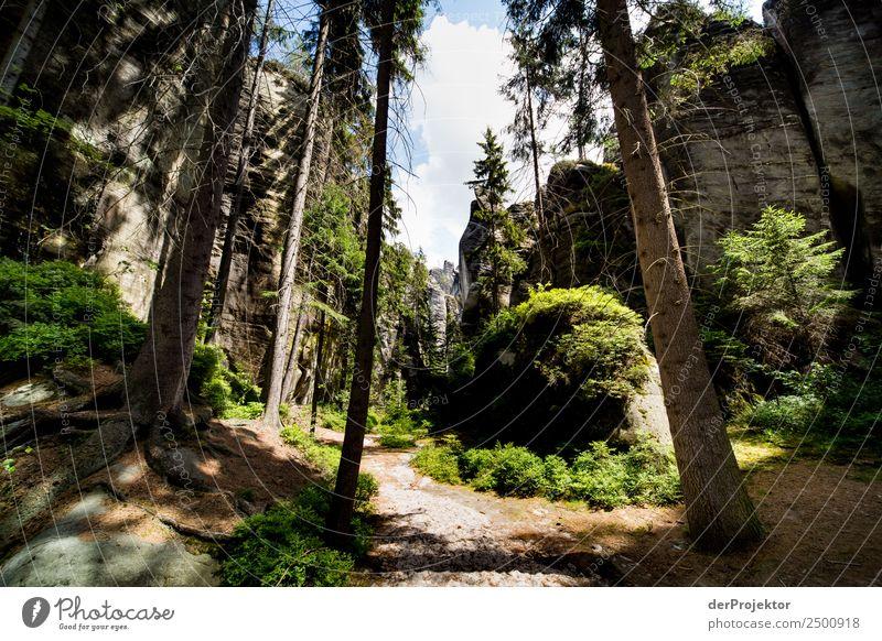In der Adersbach-Weckelsdorfer Felsenstadt Natur Ferien & Urlaub & Reisen Sommer Pflanze Landschaft Tier Freude Wald Ferne Berge u. Gebirge Umwelt Tourismus