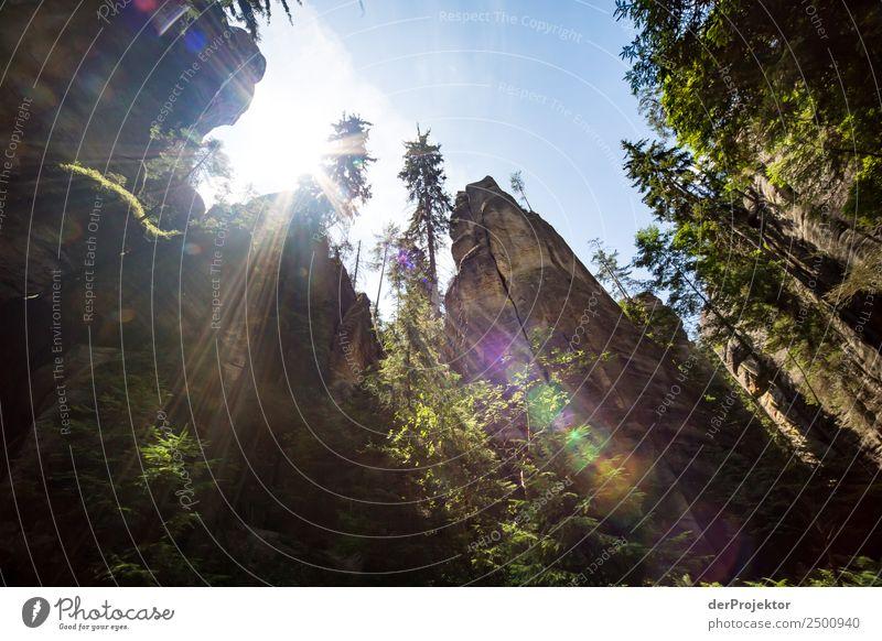 In der Adersbach-Weckelsdorfer Felsenstadt Natur Ferien & Urlaub & Reisen Sommer Pflanze Landschaft Tier Freude Wald Ferne Berge u. Gebirge Umwelt Glück