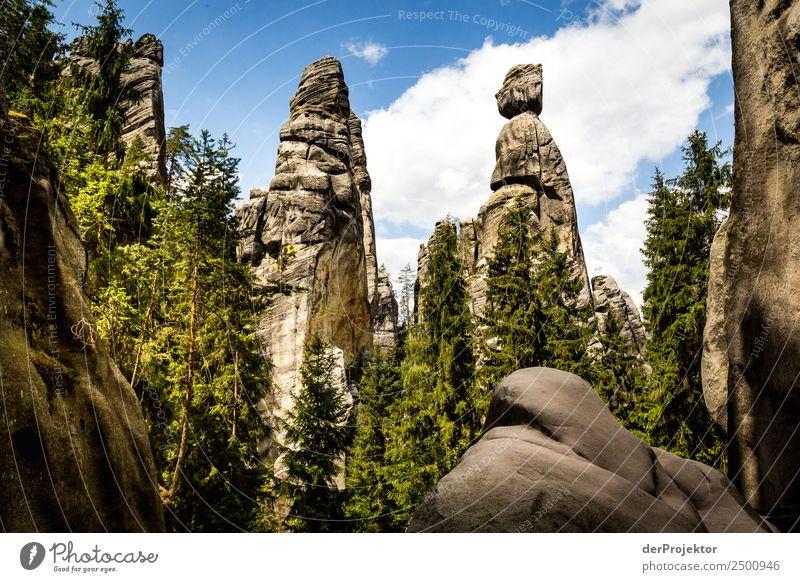 Die zwei Mönche Natur Ferien & Urlaub & Reisen Sommer Pflanze Landschaft Baum Tier Freude Wald Ferne Berge u. Gebirge Umwelt Tourismus Freiheit Ausflug Felsen