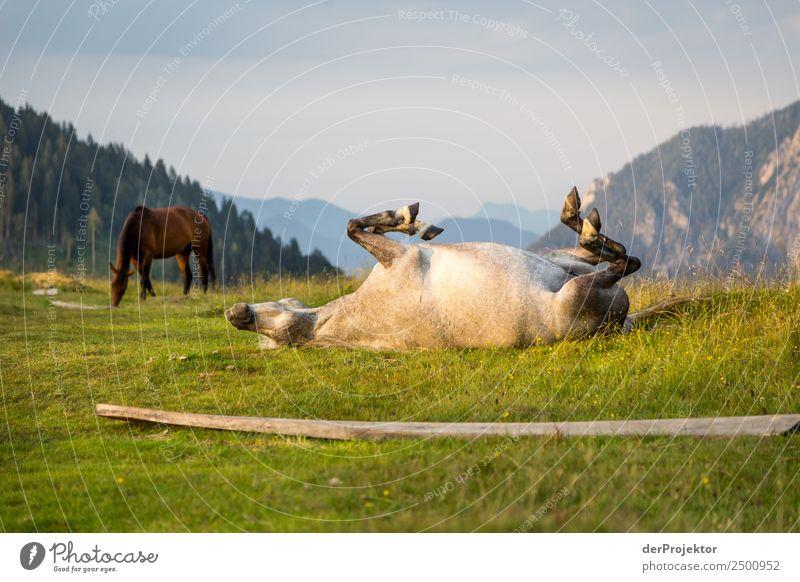 Einfach mal ablegen bei der Hitze Ferien & Urlaub & Reisen Tourismus Ausflug Abenteuer Ferne Freiheit Berge u. Gebirge wandern Umwelt Natur Landschaft Sommer