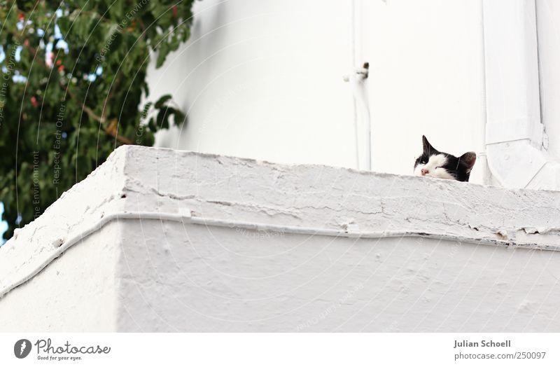Auf der Mauer auf der Lauer weiß Tier Stein Katze beobachten