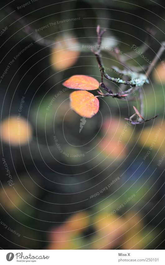 Herbstlich Sträucher Blatt braun mehrfarbig herbstlich Herbstlaub Herbstfärbung Herbstwald Ast Zweig Zweige u. Äste Farbfoto Außenaufnahme Menschenleer