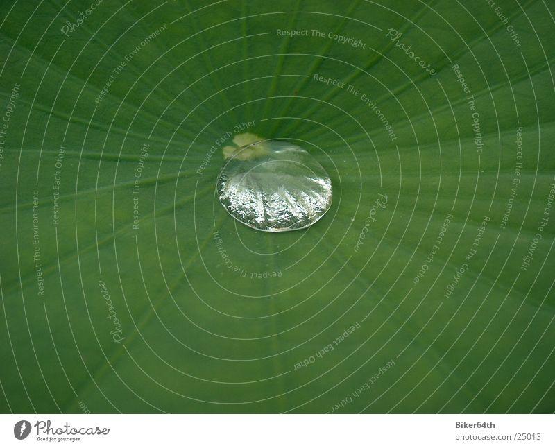 Regentropfen Natur Wasser Pflanze Blatt