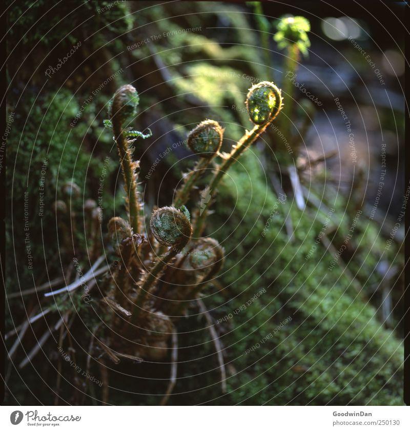 St. James Park. Natur alt schön Pflanze Blume dunkel Umwelt Erde elegant natürlich authentisch Urelemente einfach trocken Moos Farn
