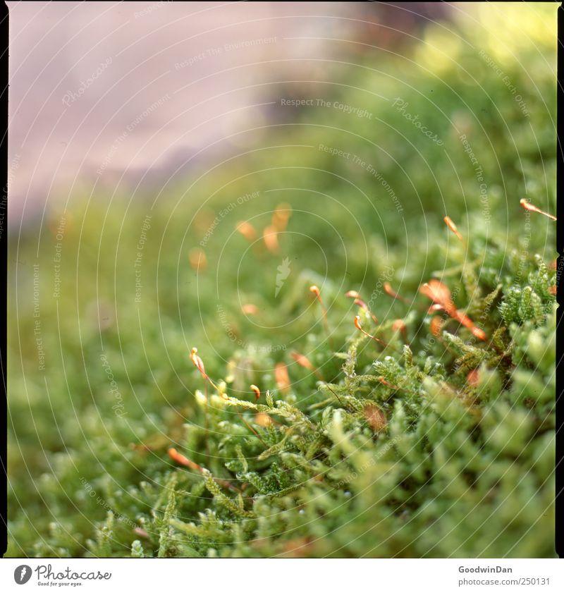 St. James Park. Natur schön Pflanze Umwelt authentisch einfach viele Moos
