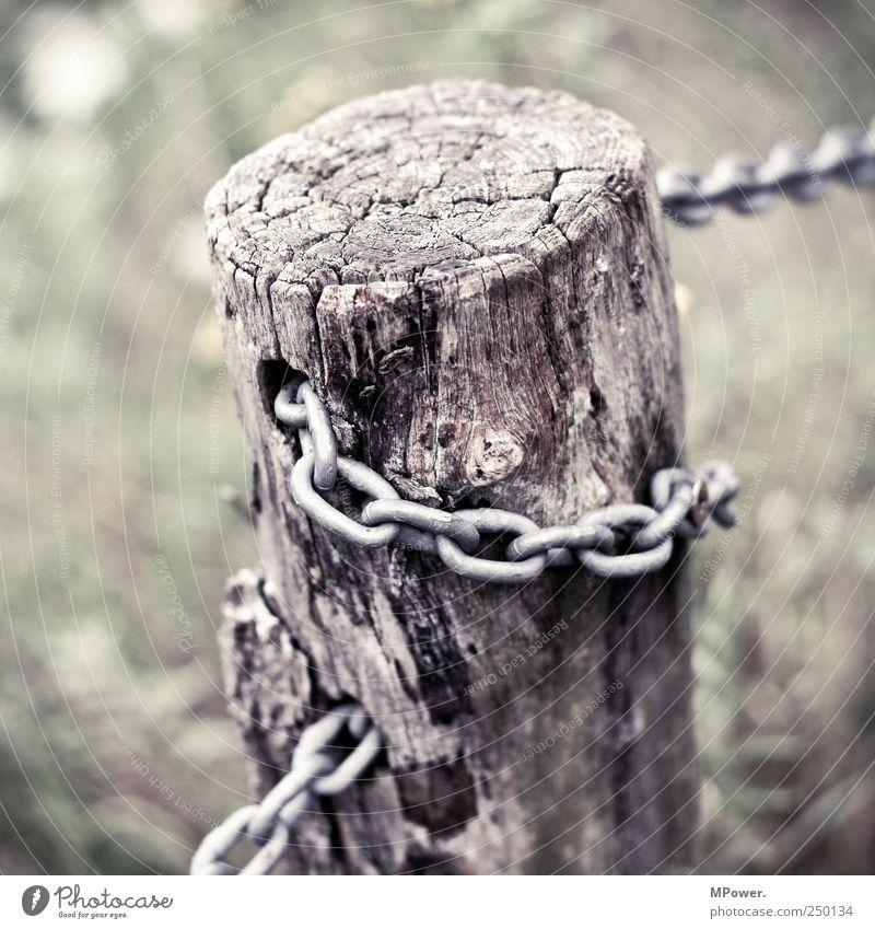 Verkettung Holz Zusammenhalt Baumstamm Kette Eisen morsch Verbundenheit Holzpfahl Zaun Zaunpfahl Kettenglied Jahresringe Baumrinde Quadrat Ast gelöchert