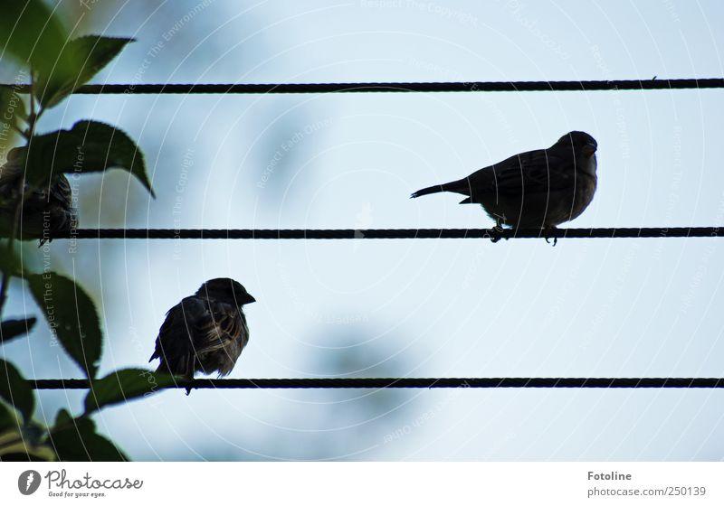 Was für eine Aussicht!!! Umwelt Natur Pflanze Tier Sträucher Blatt Wildtier Vogel hell natürlich Spatz Seil Farbfoto Gedeckte Farben Außenaufnahme Nahaufnahme
