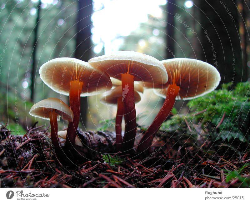 Pilzgruppe Wald Gegenlicht Pflanze braun Tiefenschärfe Makroaufnahme Bodenbelag Lampe