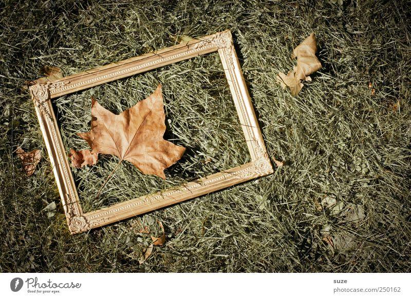 ahorn-blatt-bild-rahmen-wiese Natur grün Blatt Umwelt Herbst Wiese orange gold natürlich außergewöhnlich Boden Bild Schönes Wetter Rahmen Herbstlaub edel
